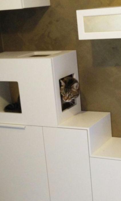 Una postazione gatto con schiena in foglia oro, coordinata all'arredo della cucina, da raggiungere attraverso un percorso studiato per loro