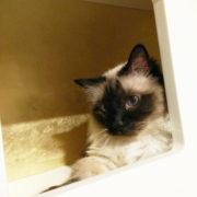 Progetti di arricchimento ambientale per gatti, Pesaro