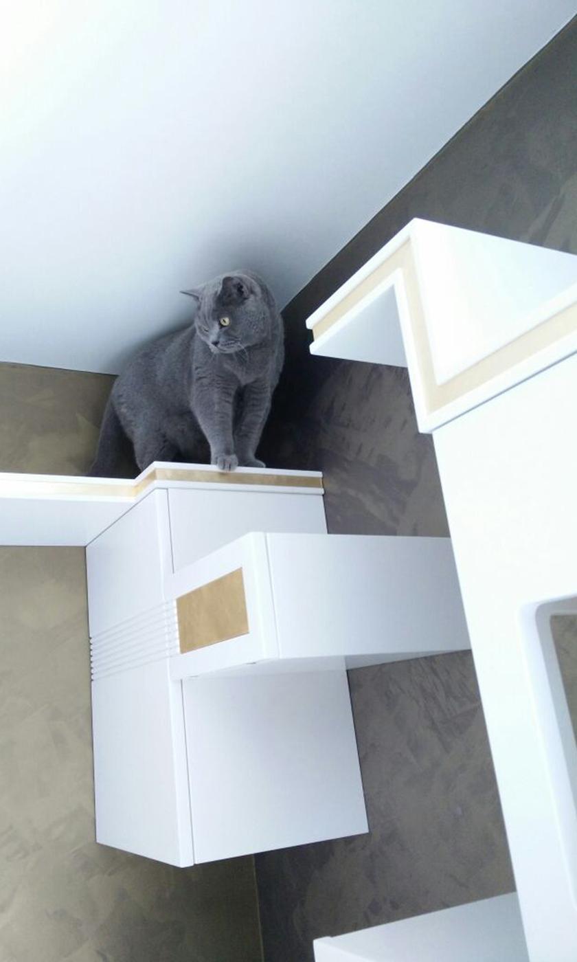 Marcello Gennari progetta mobili e percorsi di arricchimento ambientale per gatti