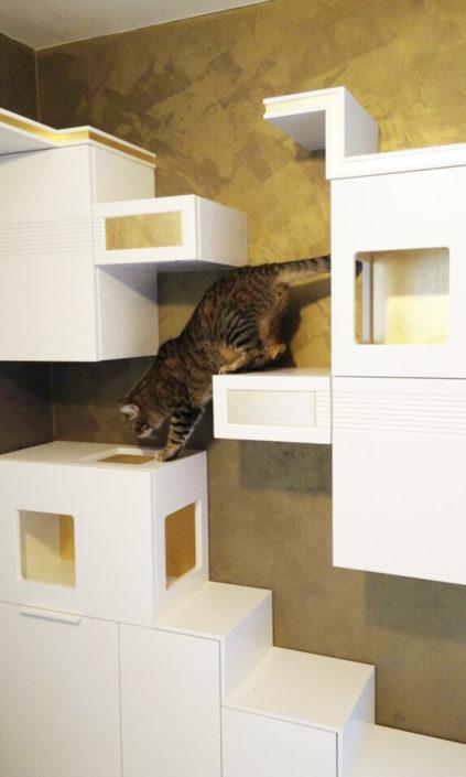 Gatti in casa. Progetto spazi condivisi per una convivenza gioiosa