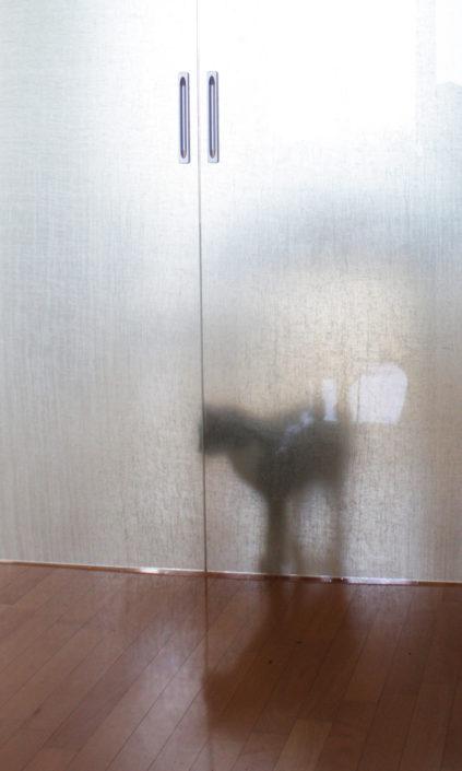 Progettazione arricchimento ambientale per gatti